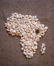 Cowrie on Afrika